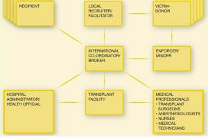 The many different actors involved in the transnational crime of trafficking in human beings for the purpose of organ removal (OSCE)