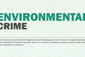 Fragment of the infographic on Environmental Crime (OSCE)
